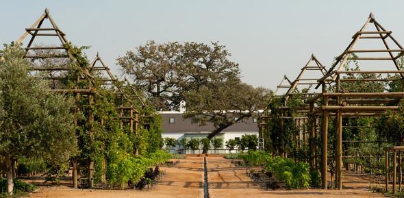 Иностранный опыт: Органическая еда в ЮАР. Изображение № 22.