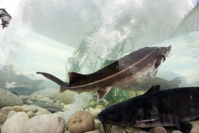 Двухметровый аквариум вНовопушкинском сквере. Изображение № 2.