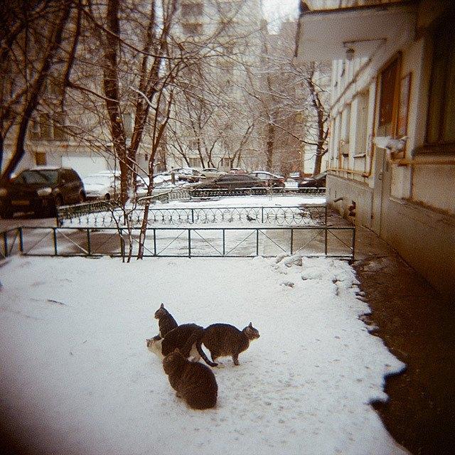 Камера наблюдения: Москва глазами Варвары Лозенко. Изображение № 17.