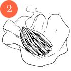 Рецепты шефов: Овощной спринг-ролл. Изображение № 5.
