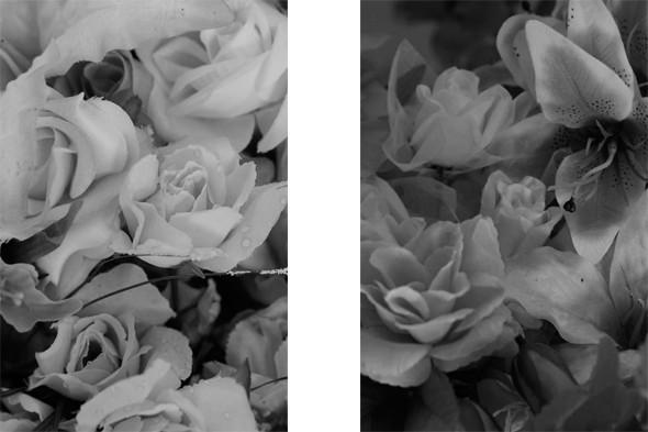 Ожившие искусcтвенные цветы фотографа Глеба Косорукова . Изображение № 20.