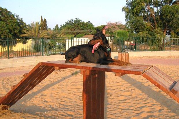 Иностранный опыт: Как устроены площадки для выгула собак в 5 городах мира. Изображение № 15.