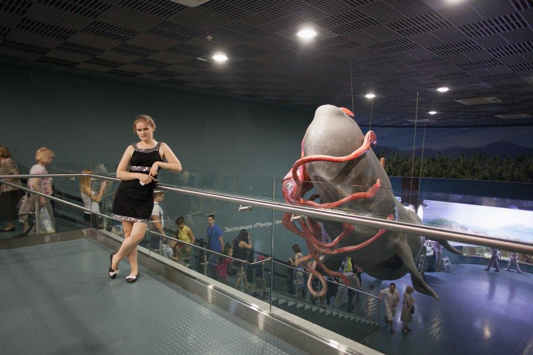 «Главные здесь — косатки, но самые милые — моржи»: На ВДНХ открылся океанариум. Изображение № 7.