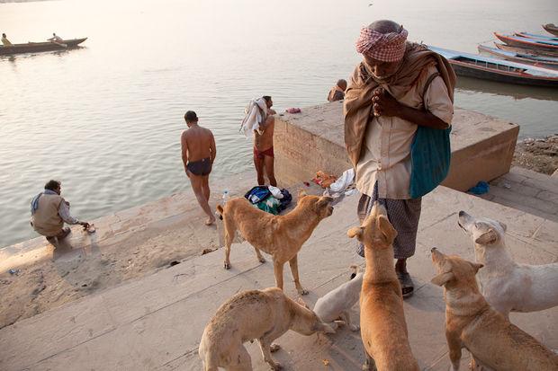 Иностранный опыт: Что делать сбездомными собаками. Изображение № 3.