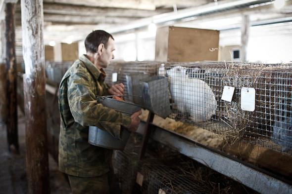 Народное хозяйство: 5 ферм, продукты которых можно купить в Петербурге. Изображение № 59.