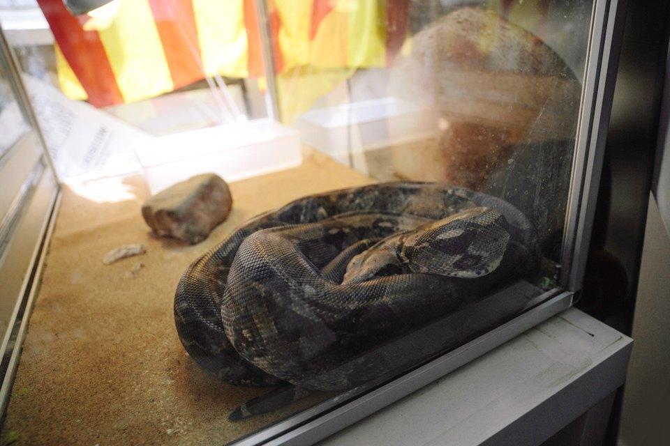 Удав Зина, кот Старки, рыба Крупская и другие животные в офисах. Изображение № 10.
