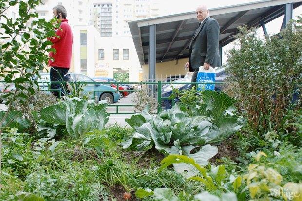 На районе: Как разбить огород и выращивать бесплатные овощи для соседей в Шушарах. Изображение № 15.