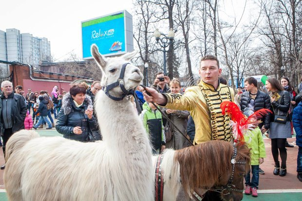 В «Сокольниках» повыходным проводят парады животных. Изображение № 2.