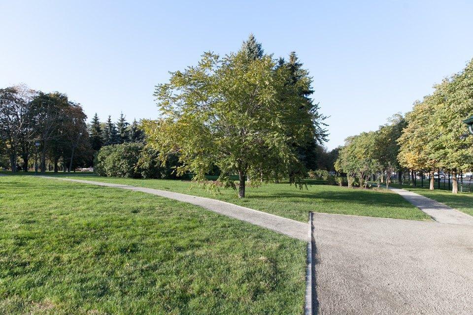 Обновлённый Сиреневый сад наЩёлковском шоссе. Изображение № 5.