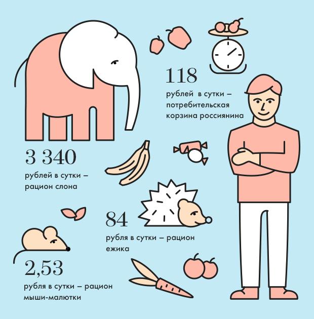 Москва в цифрах: Сколько ест слон в московском зоопарке. Изображение № 1.