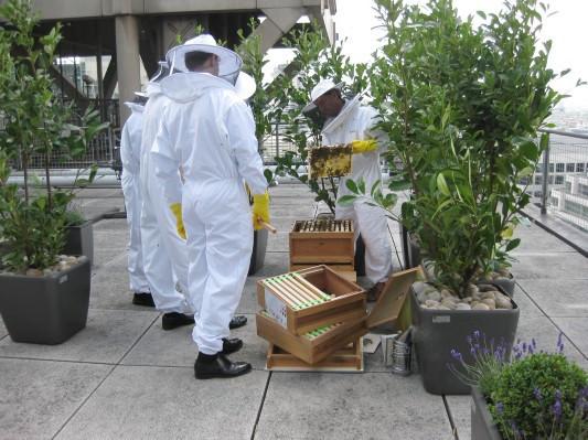Как у них: «Городские пчёлы» в Лондоне. Изображение № 11.