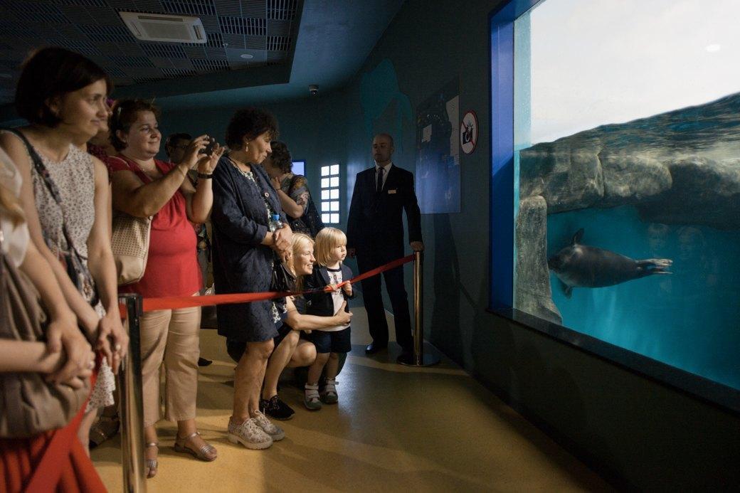 «Главные здесь — косатки, но самые милые — моржи»: На ВДНХ открылся океанариум. Изображение № 4.