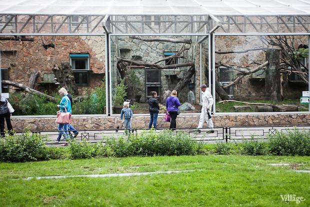 Как живёт и меняется Ленинградский зоопарк . Изображение № 6.