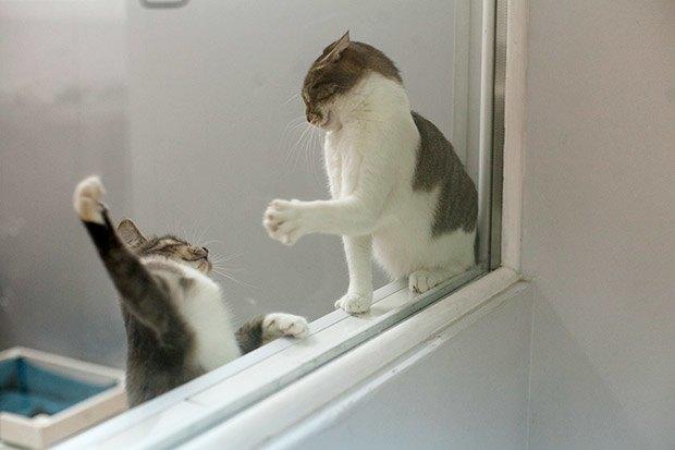 Кошкин дом: Как подготовить квартиру к появлению домашнего питомца. Изображение № 16.