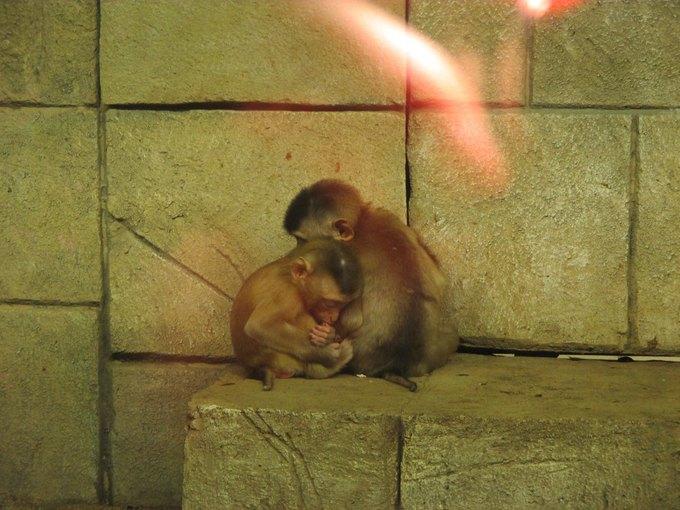 Зоозащитники просят прокуратуру проверить зоопарк вТЦ«Рио» . Изображение № 3.