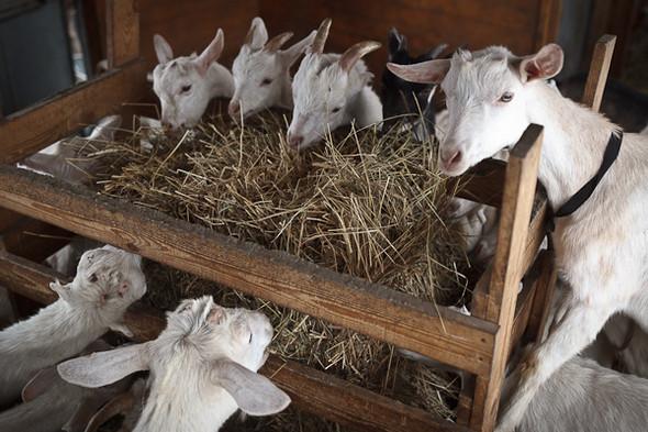 Народное хозяйство: 5 ферм, продукты которых можно купить в Петербурге. Изображение № 37.
