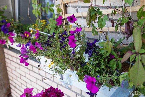 Где посадки: Что горожане выращивают на балконах иподоконниках. Изображение № 54.