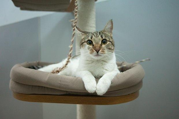Кошкин дом: Как подготовить квартиру к появлению домашнего питомца. Изображение № 13.