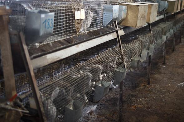 Народное хозяйство: 5 ферм, продукты которых можно купить в Петербурге. Изображение № 52.