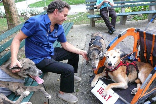 Иностранный опыт: Как устроены площадки для выгула собак в 5 городах мира. Изображение № 5.