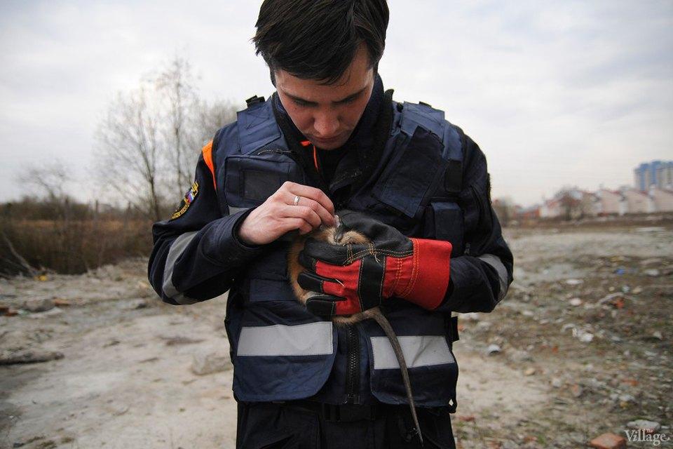 Кота за хвост: Как МЧС спасает кошек. Изображение № 14.