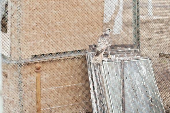 Подрезать крылья: Как работают орнитологи на аэродромах. Изображение № 31.