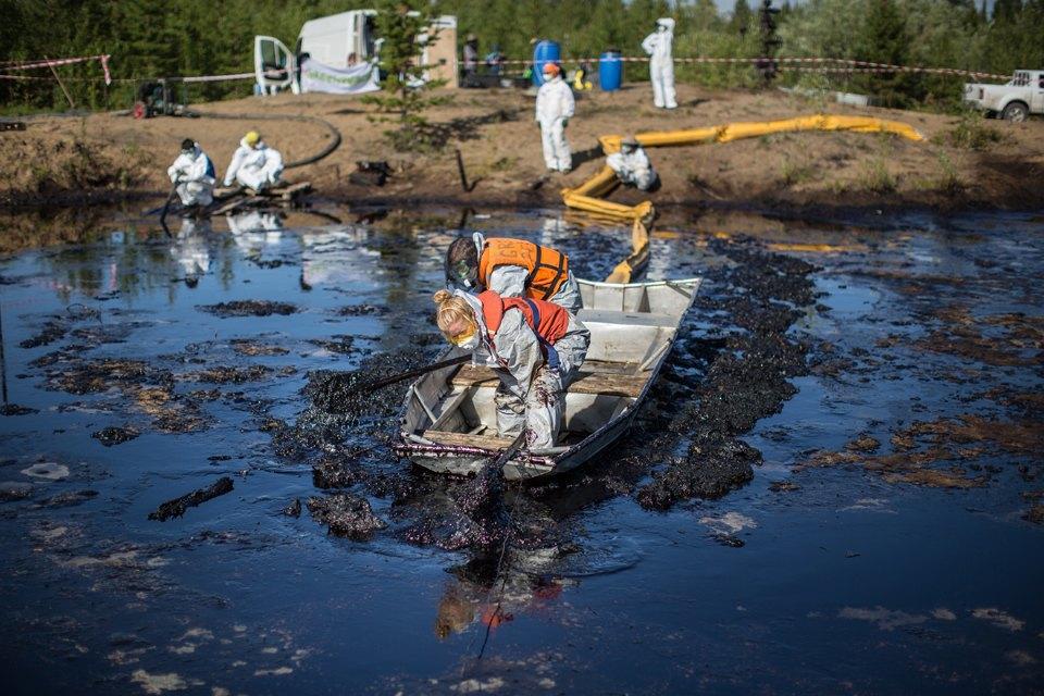 Как леса Коми очищают от нефти. Изображение № 23.