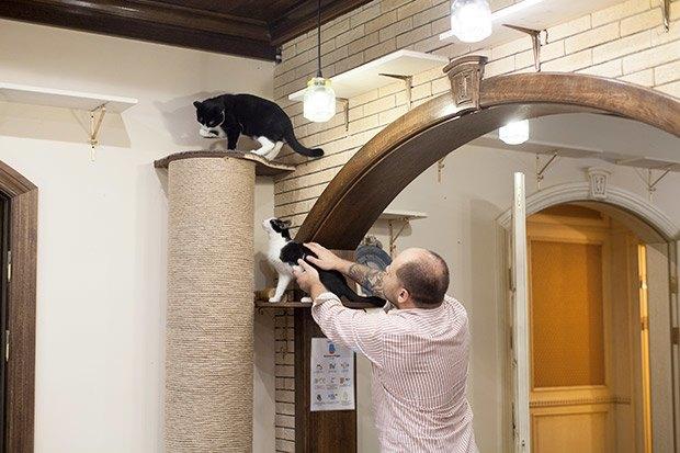 Кошкин дом: Как подготовить квартиру к появлению домашнего питомца. Изображение № 24.