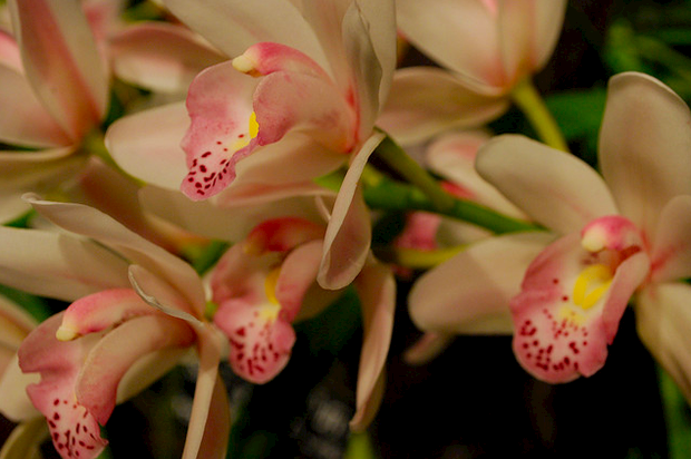 В «Аптекарском огороде» открывается фестиваль орхидей. Изображение № 1.
