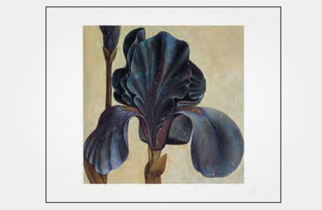 Набор с картинами Колса Филлипса. Изображение № 1.