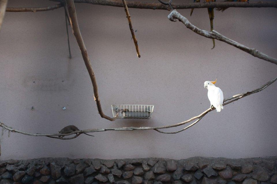 Биолог Елена Мигунова онаглости белок, хищных птицах вКремле иоботношении москвичей кживотным. Изображение № 8.