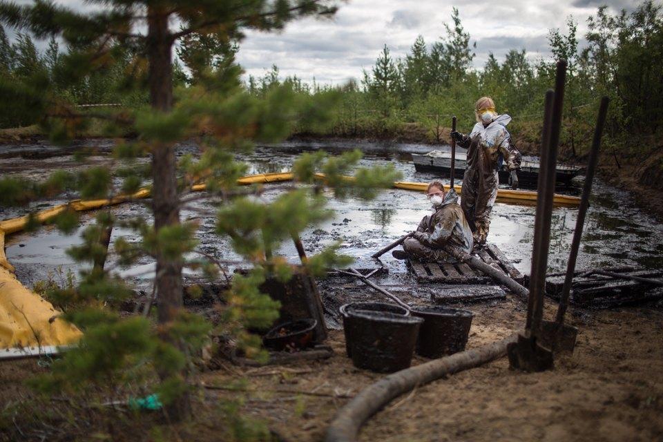 Как леса Коми очищают от нефти. Изображение № 27.