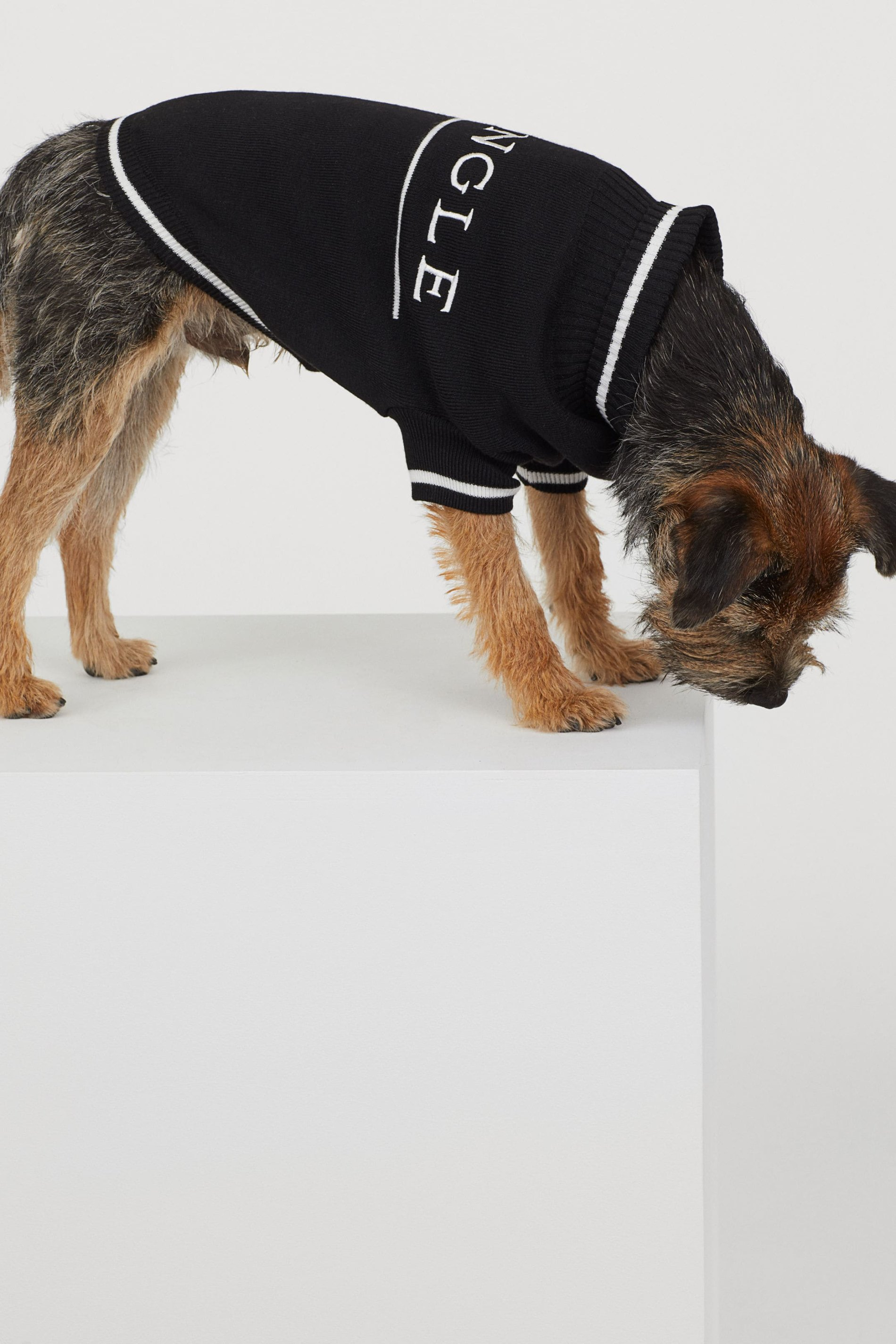H m одежда для собак