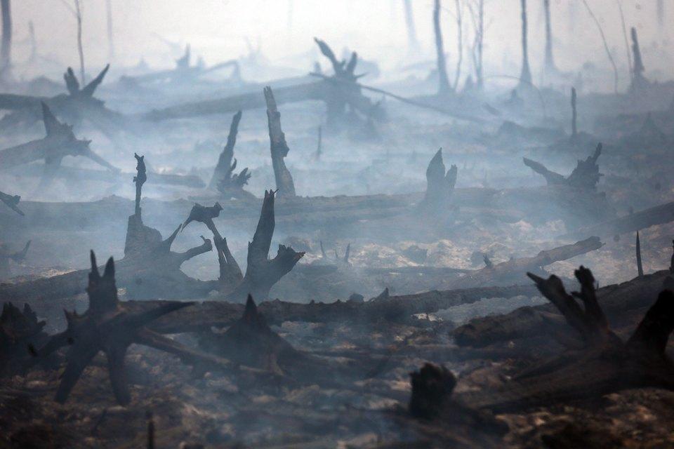 Как тушат лесные пожары вТверской области. Изображение № 6.