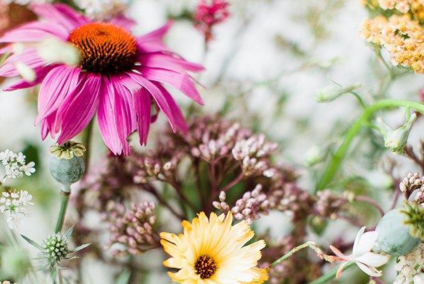 Раз ромашка, два ромашка: Из каких цветов и растений делать букеты на даче. Изображение № 5.