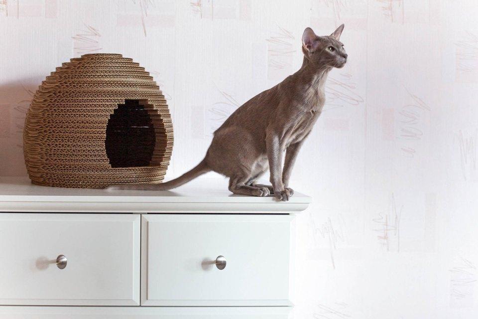 Как заработать на картонных домиках для кошек. Изображение № 8.
