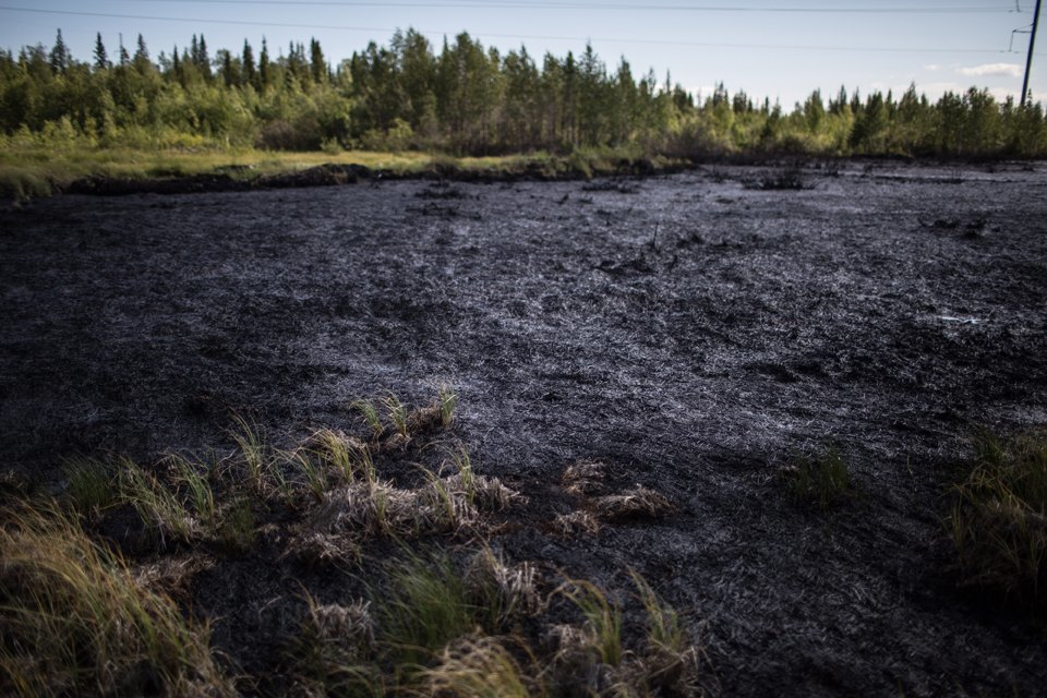 Как леса Коми очищают от нефти. Изображение № 30.