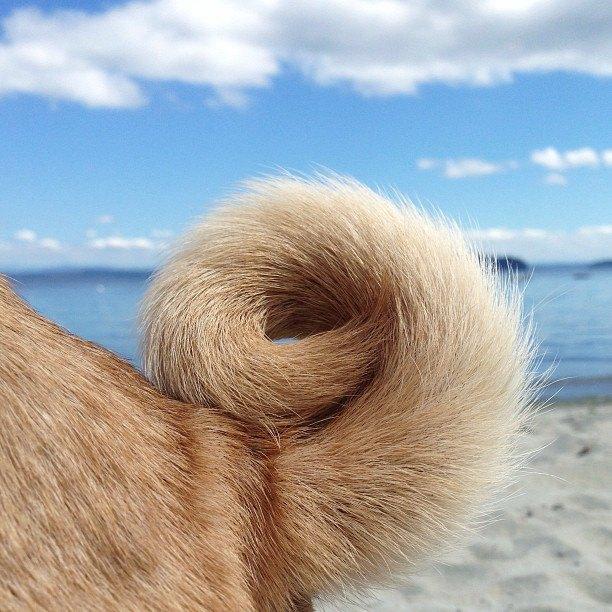 Лучшие страницы Instagram с животными: Часть 1. Изображение № 17.