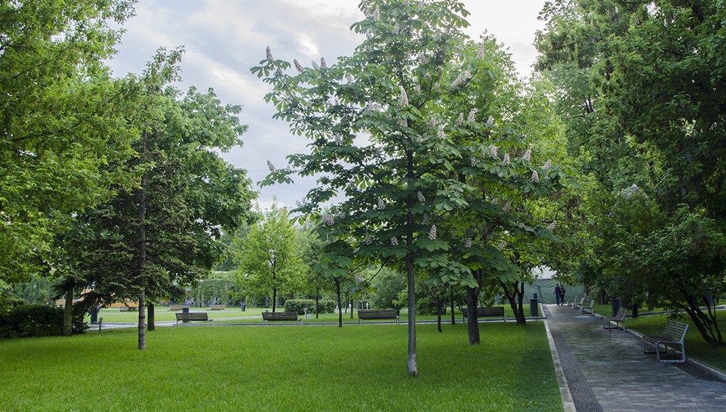 Сад имени Баумана. Изображение № 24.