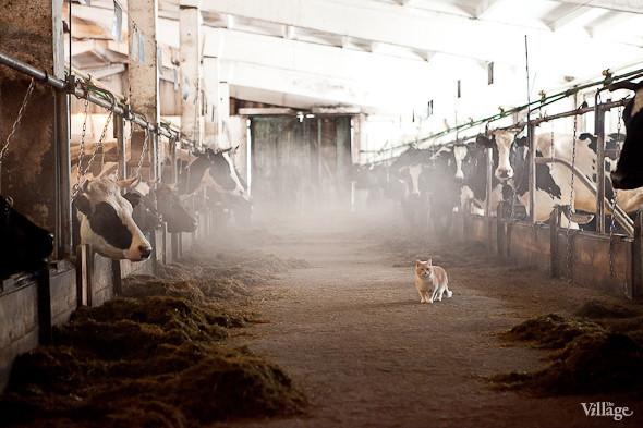 В комплексе проживает множество котов, они уничтожают крыс. Изображение № 25.