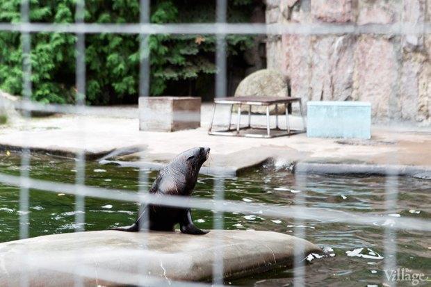 Директор московского зоопарка: «Погода была ужасной, всё выглядело очень грустно». Изображение № 22.