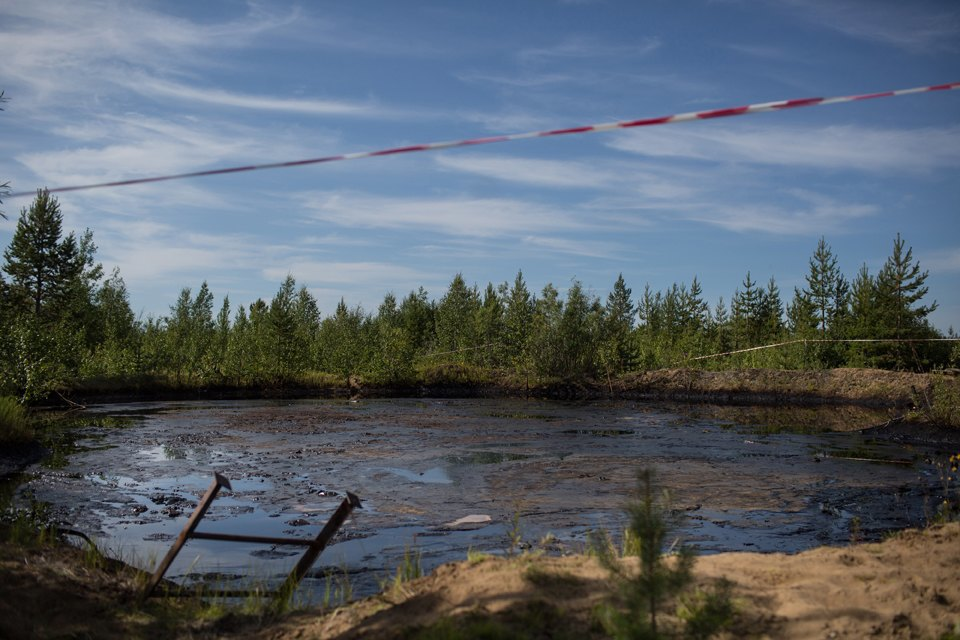 Как леса Коми очищают от нефти. Изображение № 16.