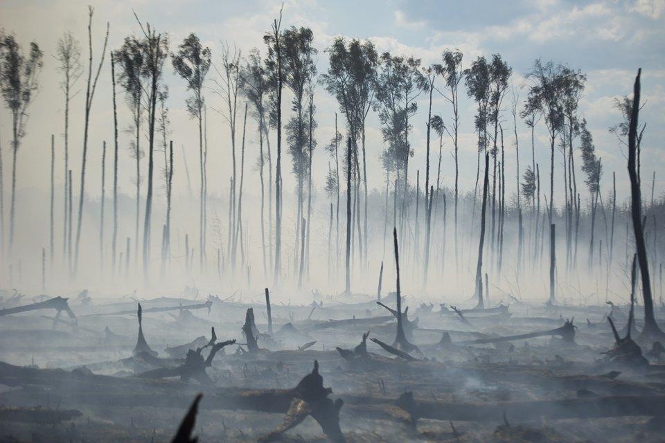 Как тушат лесные пожары вТверской области. Изображение № 1.