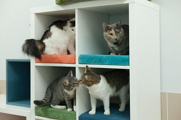 Кошкин дом: Как подготовить квартиру к появлению домашнего питомца. Изображение № 15.