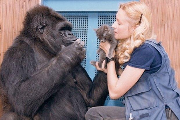 Этим вечером: E (rarta) Motion Pictures, фильм о говорящей горилле и начало продаж «Бэтман Аполло». Изображение № 3.