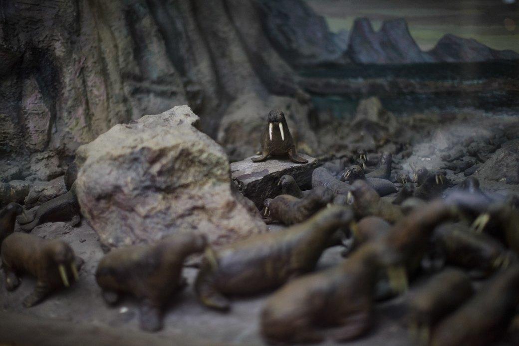 «Переезд невозможен»: Бывший директор музея Арктики иАнтарктики— оРПЦ ибелых медведях. Изображение № 8.