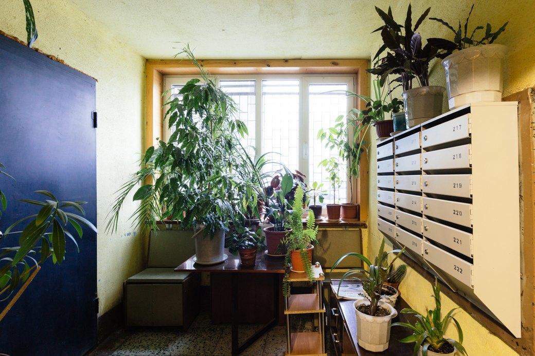 Я живу в доме «на курьих ножках» на«Приморской» (Петербург). Изображение № 14.