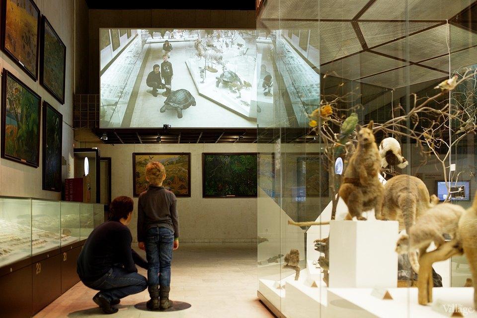 Перемены в Дарвиновском музее: «Можно бегать, прыгать и шуметь». Изображение № 20.