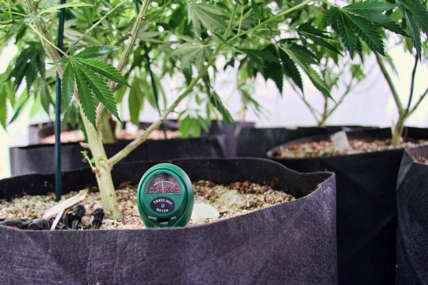 Как изменилась жизнь вКолорадо после легализации марихуаны . Изображение № 2.