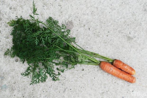 На районе: Как разбить огород и выращивать бесплатные овощи для соседей в Шушарах. Изображение № 8.